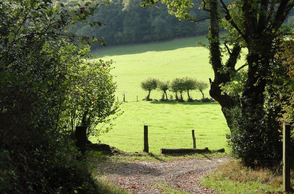 Rando magnifique dans un paysage tranquil