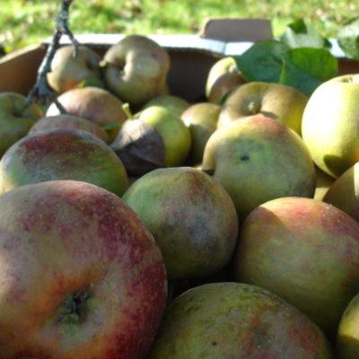 Les Pommes de Normandie